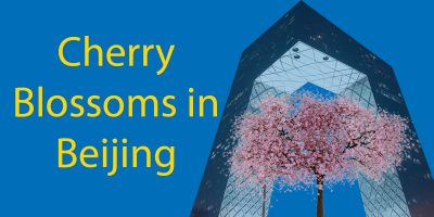 Cherry Blossoms in Beijing You Have To See in 2021