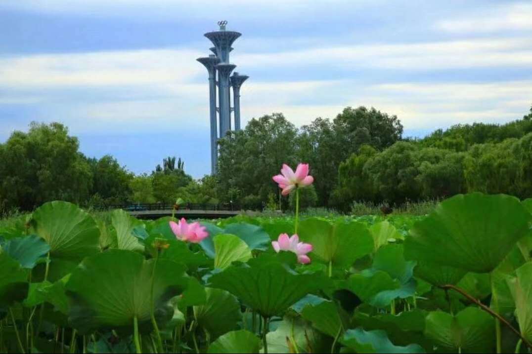 forest-park-summer-beijing